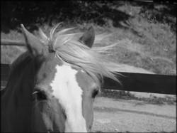Ce que les chevaux nous disent