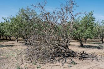 Drought Imperils California Ag Economy