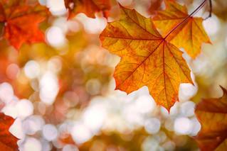 Equinócio de Outono: tempo de recolhimento e descoberta interior