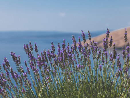 February Insider Tips: Calm Your Clients with Lavender Shampoo and an Essential Oil Experience