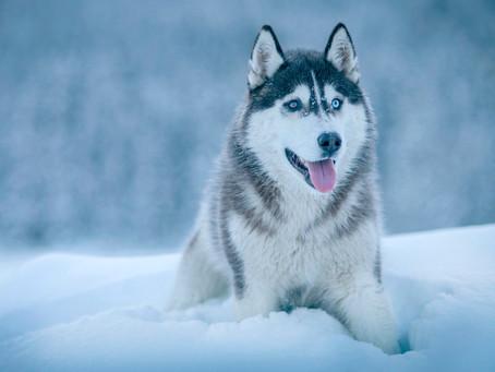 Winter Dog Grooming
