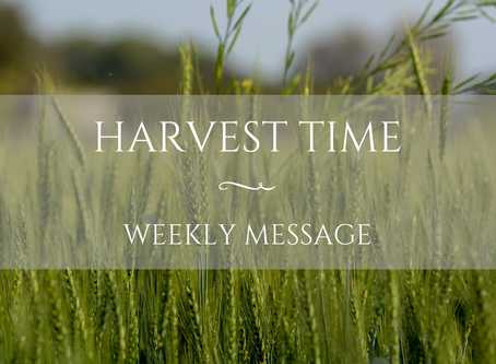 Weekly Message | Harvest Time