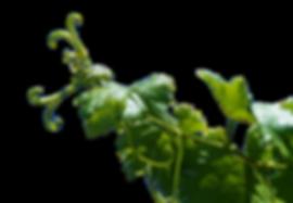 acadermic uva naturali