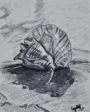 Shell-spiky