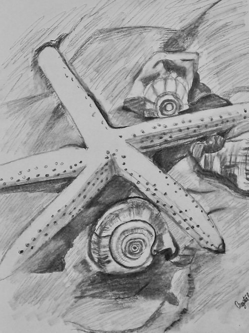 Starfish, graphite