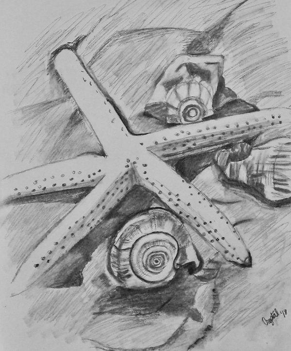 StarfishHR2.jpeg