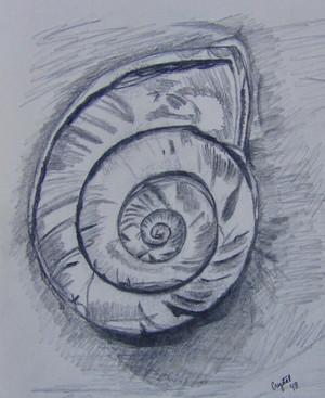 Shell-swirly