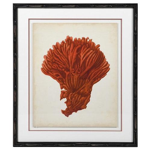 Orange Coral Picture