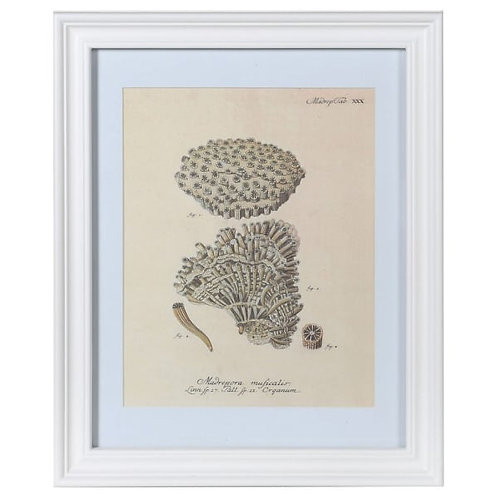 Coral Muficales in White Frame