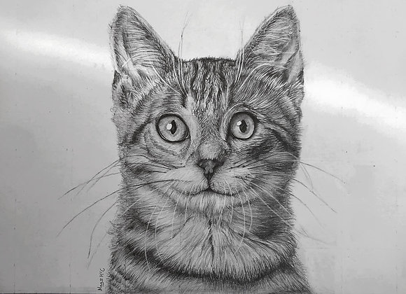 A3 B&W Single Pet portrait