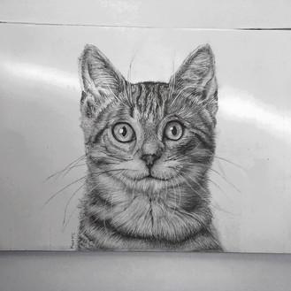Kitten on A3