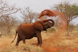 animal-wildlife-elephant-ivory-70080.jpg