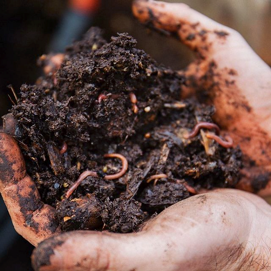 Compost in hands.png
