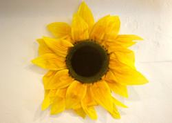 Sunflowers Lahaska