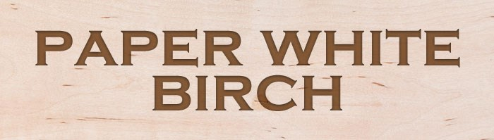 Paper-White-Birch
