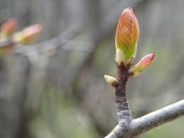Spring - An Ayurvedic Perspective