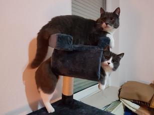 Meow ♥
