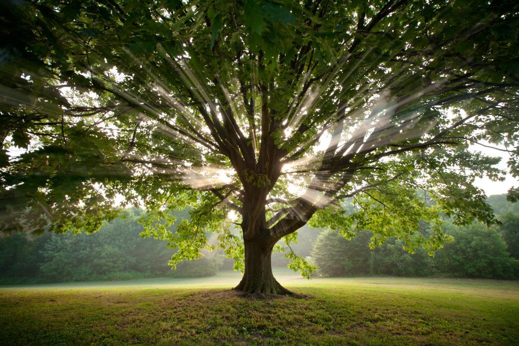 Lebanon TN Tree Service