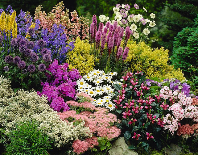 The Perennial Plant Society of Middle Tennessee