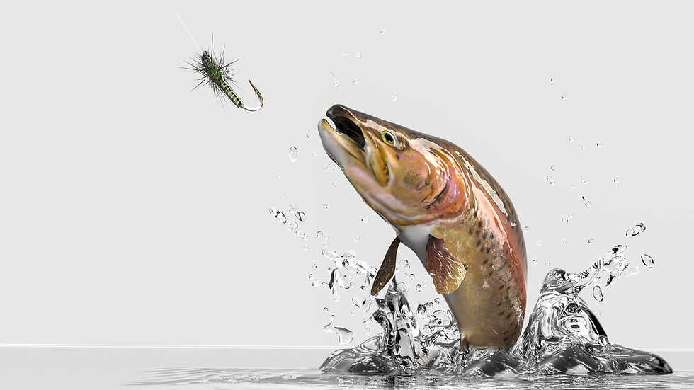 Close up image of rainbow Trout jumping