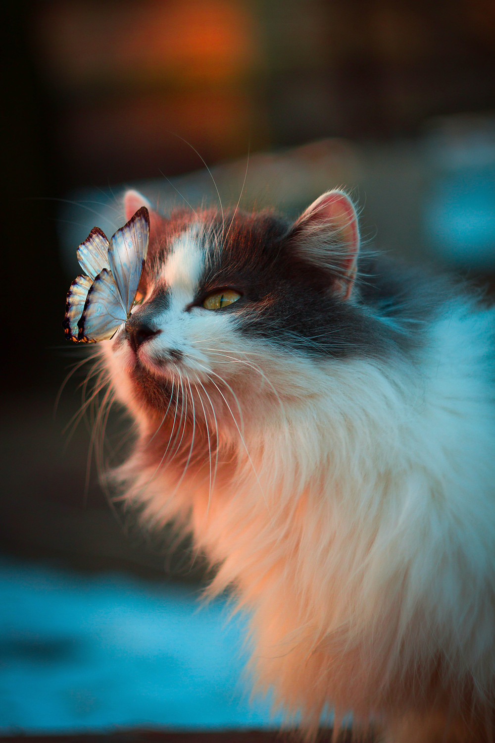 This is an image of a cat with a butterfly on its nose.
