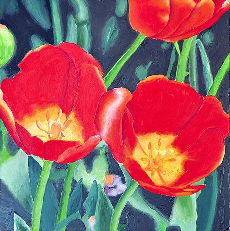 poppies-600-a.jpg