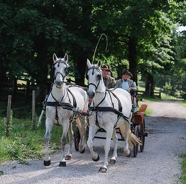 Kutschenfahrt Niederösterreich Gut Theur