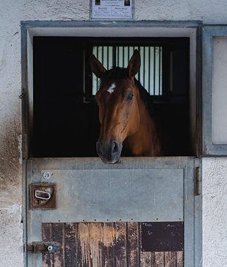Pferde Einstellen Mostviertel Gut Theure