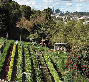local-farmer-community-support-agricultu
