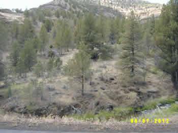99294 - Spray area on Alder Creek
