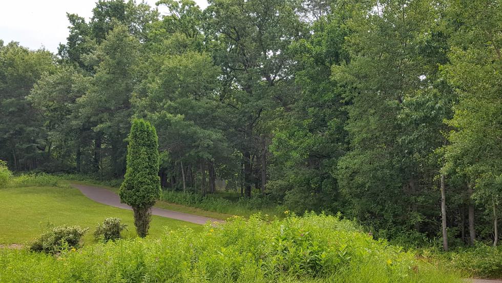Red Cedar Walking Trail