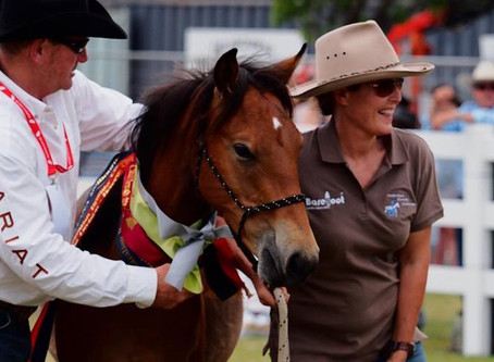 Jack and The Australian Brumby Challenge