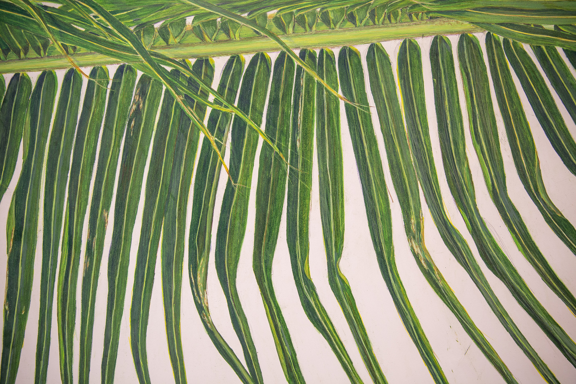 Palm Frond Drawing (detail)