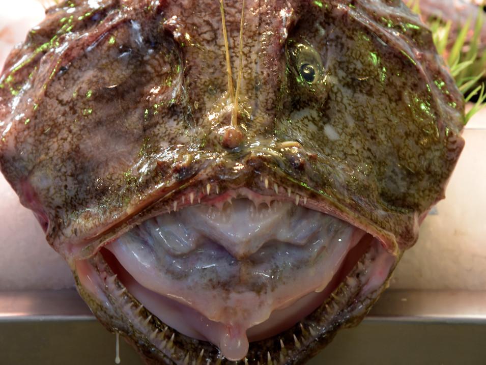 IR0009i Fisch.jpg