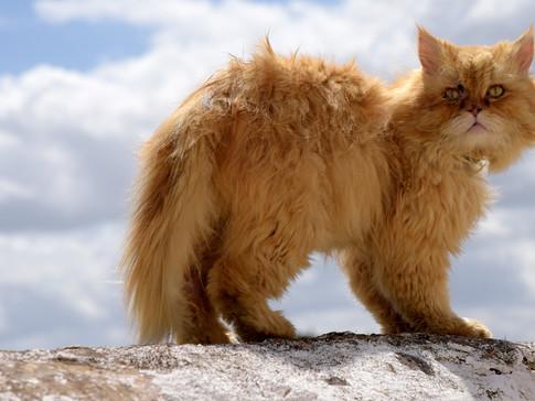 PO0008n Katze.jpg