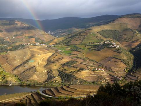 PO0008a Weinterrassen Douro.jpg