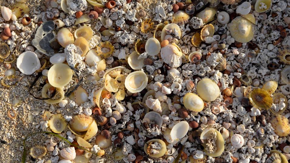 PL09a 05 IR1995 Muscheln Mannin Bay Clif