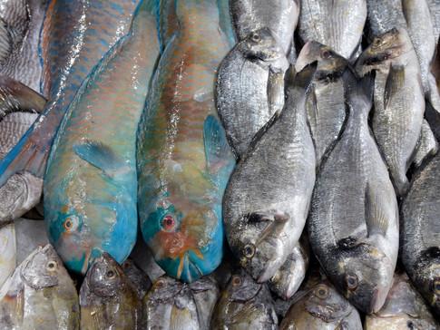 EM0007 Fischmarkt Abu Dhabi.jpg