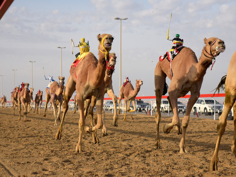 EM0009d Wahbta Camel Race.jpg