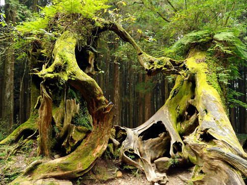 TO 06 34 TW0537 Alishan Forest.jpg