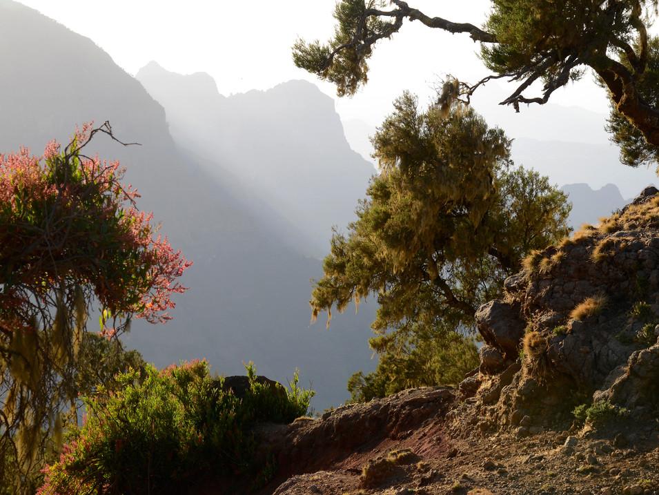 AX906d AN0343 Simien Mountains NP.jpg