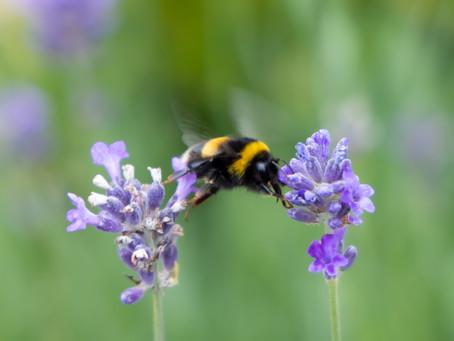 Olympic Gymnastic Bee!