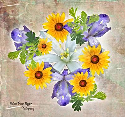 Combo star browneyed iris flat.JPG