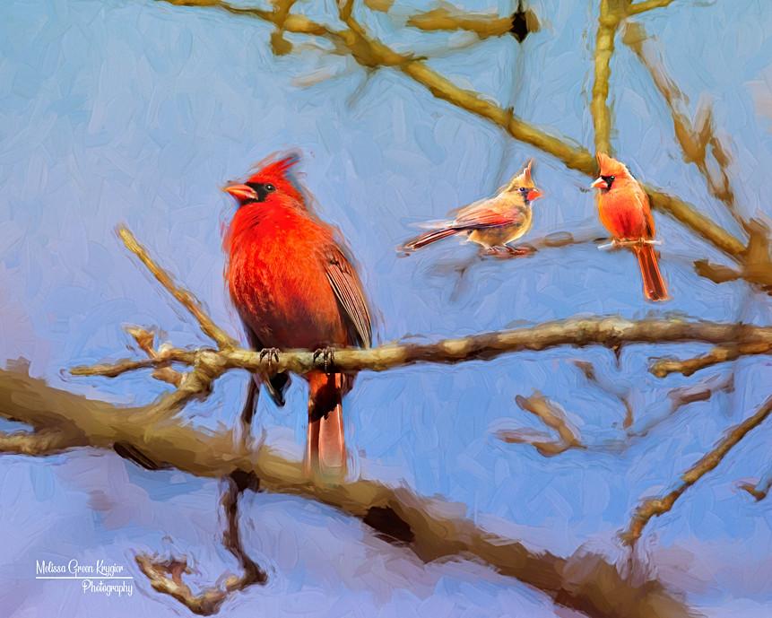 3 Cardinals in Summer (16x20)