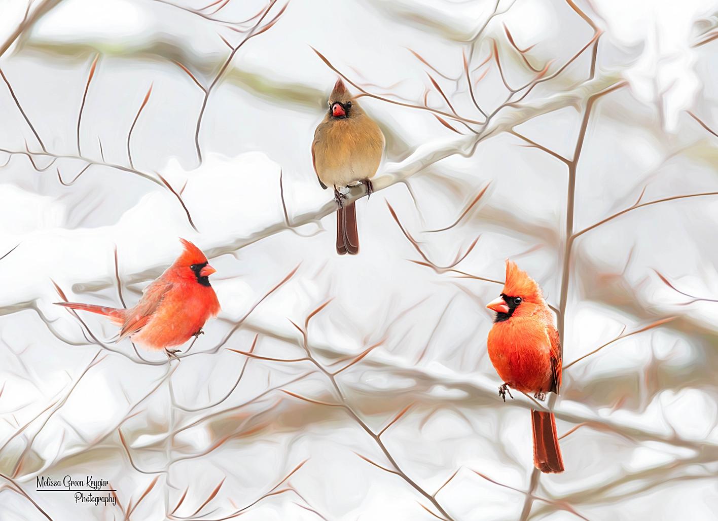 3 Cardinals in Winter (16x20)
