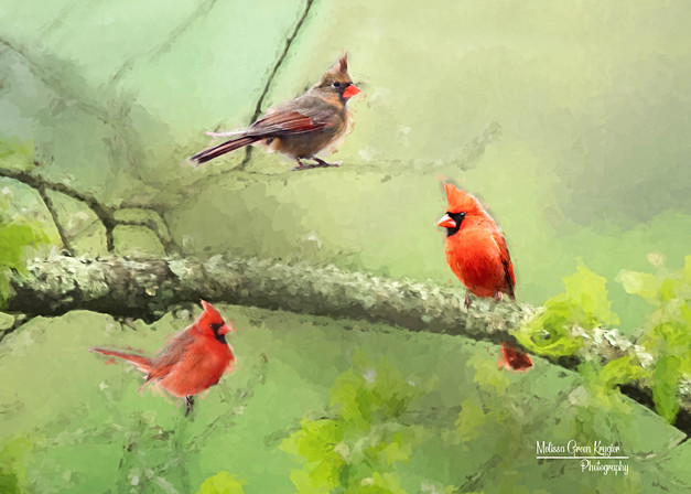 3 Cardinals in Spring (Painterly) (16x20)