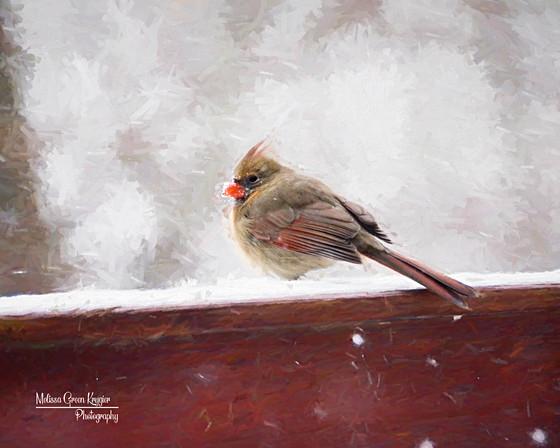 Wintry Female Cardinal-1 (16x20)