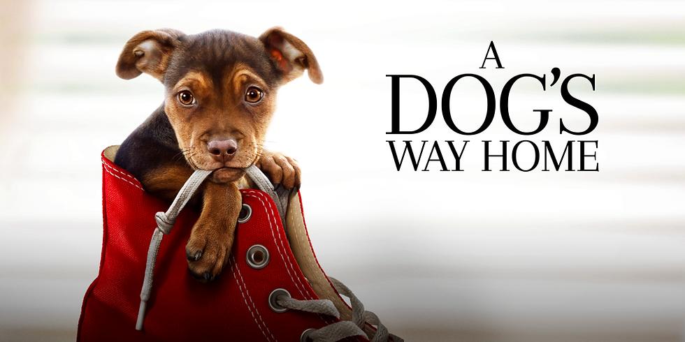 Película sensorialmente amigable: A Dog's Way Home en Cinemaworld (Pelicula en Ingles)