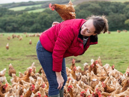 Covid: 'Chickens can't be furloughed,' egg farm warns