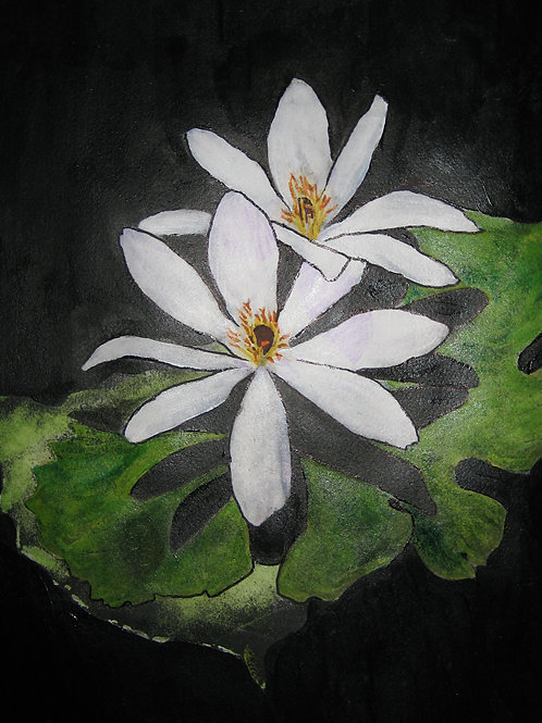 Bloodroot Blossoms